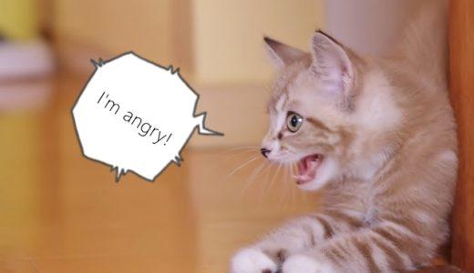 猫に引っかかれる!大事にいたらずに済んだ時の対処法。
